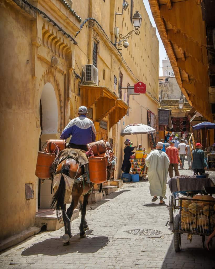 Morocco-Fes-medina-donkey