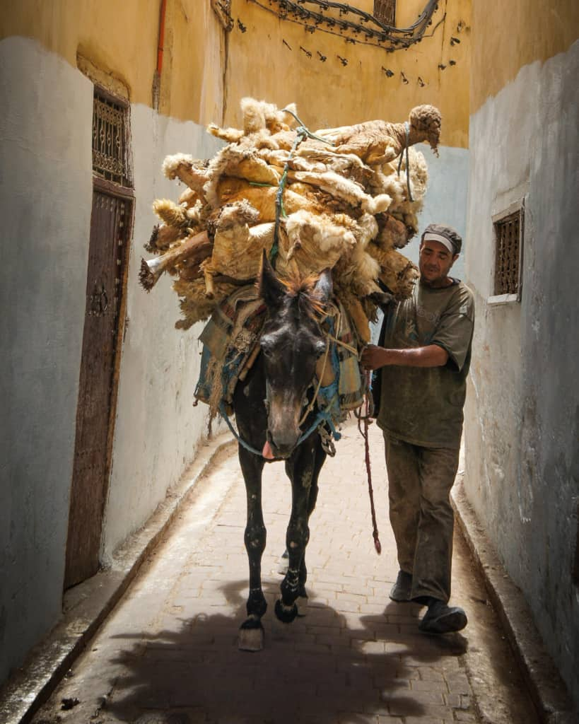 Morocco-Fes-medina-donkey-leather