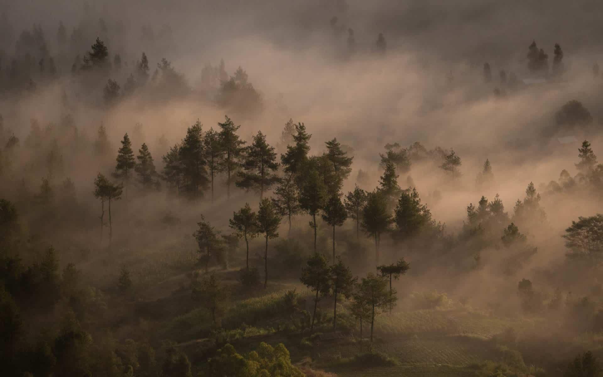 Mount-Batur-sunrise-forest-lightrays