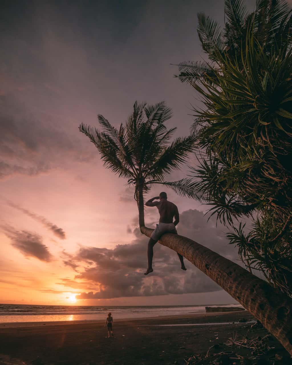 sunset-pasut-beach-palmtree