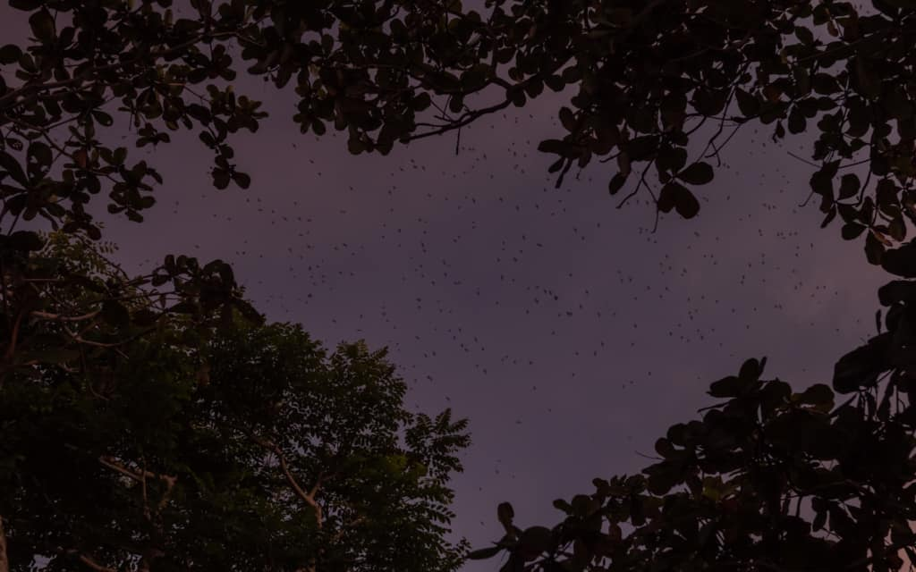 sunset-tanah-lot-bats