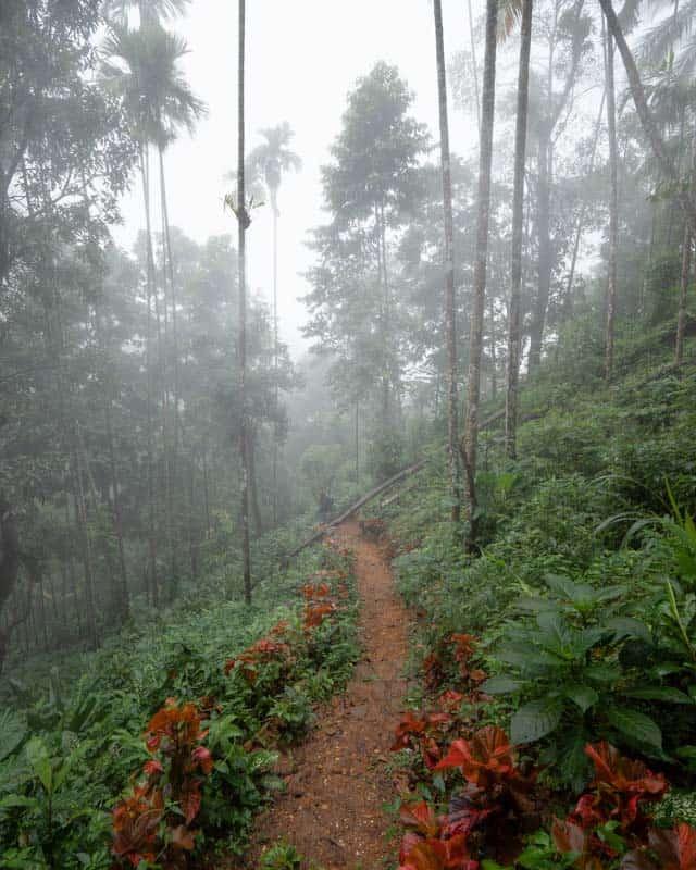 aberdeen-falls-path-mist
