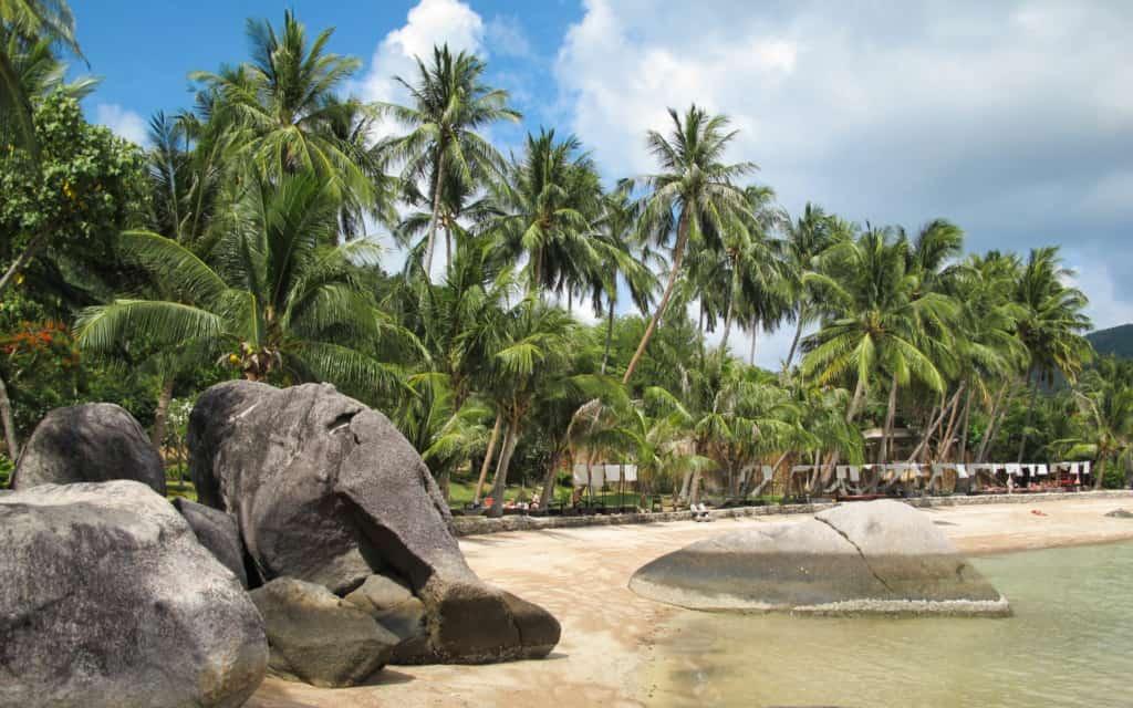sairee-beach-palmtrees-koh-tao