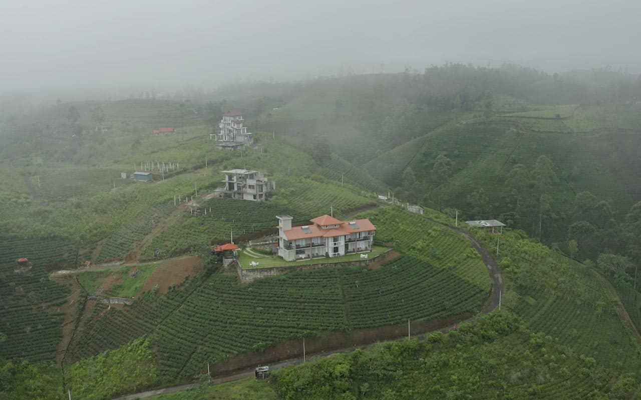 hatton-tea-fields