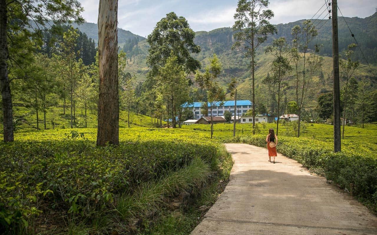 tea-plantations-nuwara-eliya-blue-fields