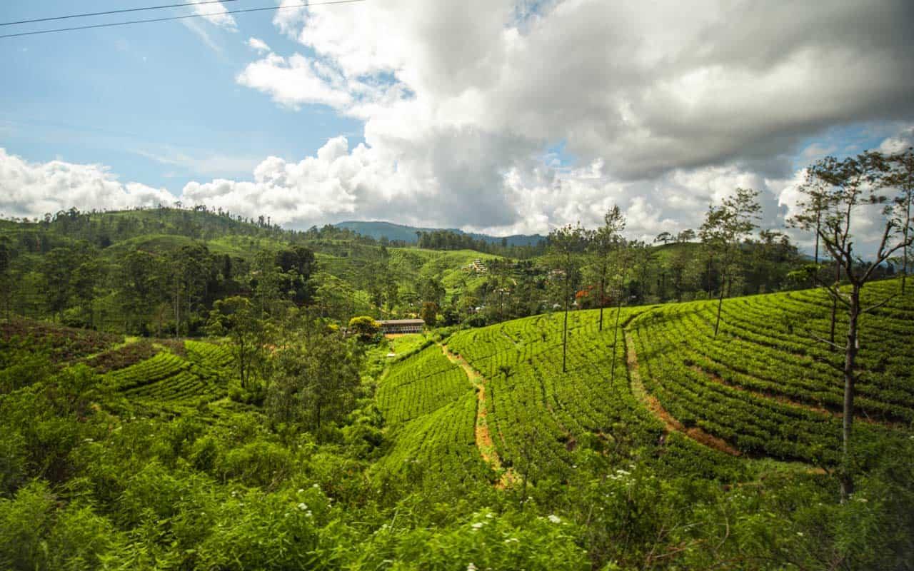 kandy-ella-train-teafields-view