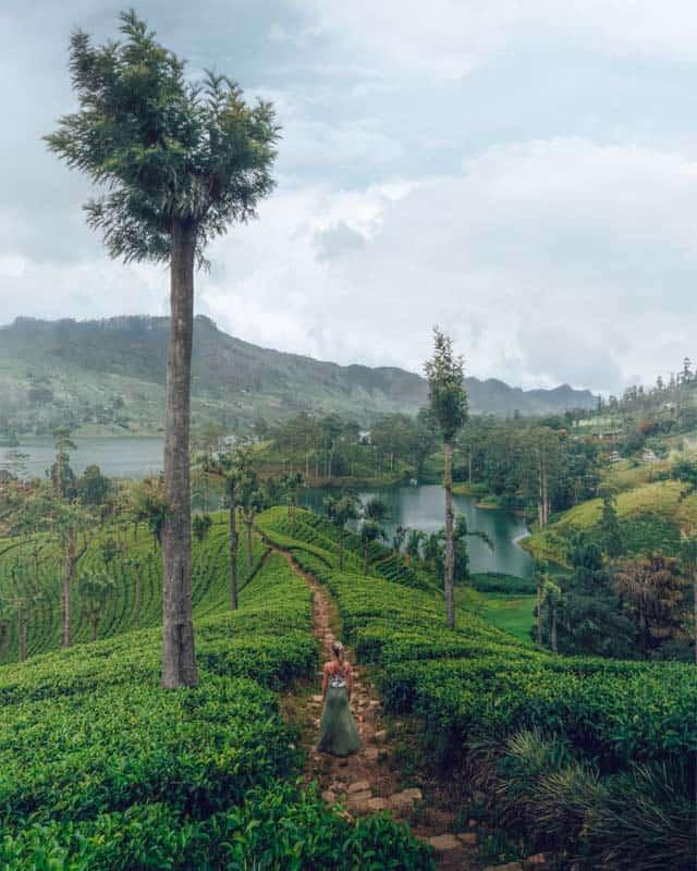 nuwara-eliya-tea-fields