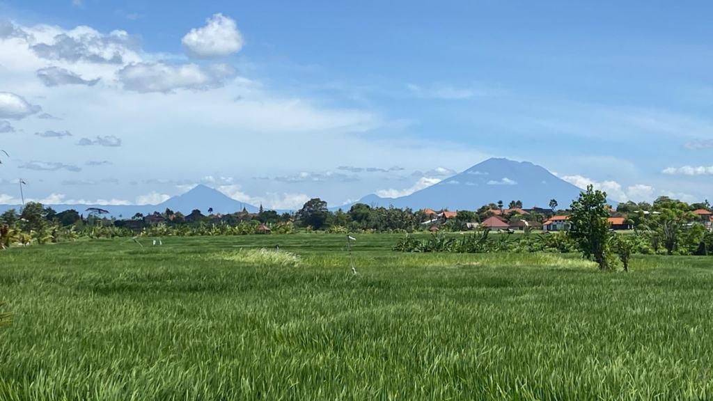 bali-rice-fields-canggu
