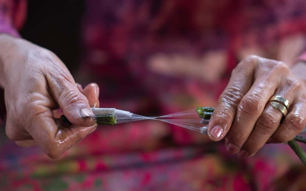 lotus-silk-fiber