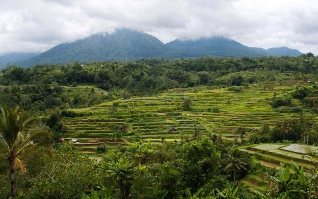munduk-rice-fields-bali