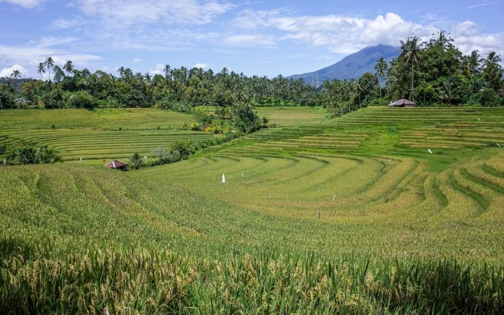 pupuan-rice-fields-bali