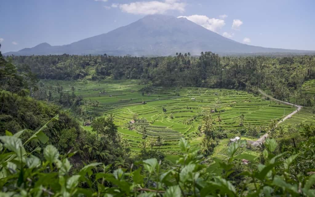 rendang-rice-fields-bali