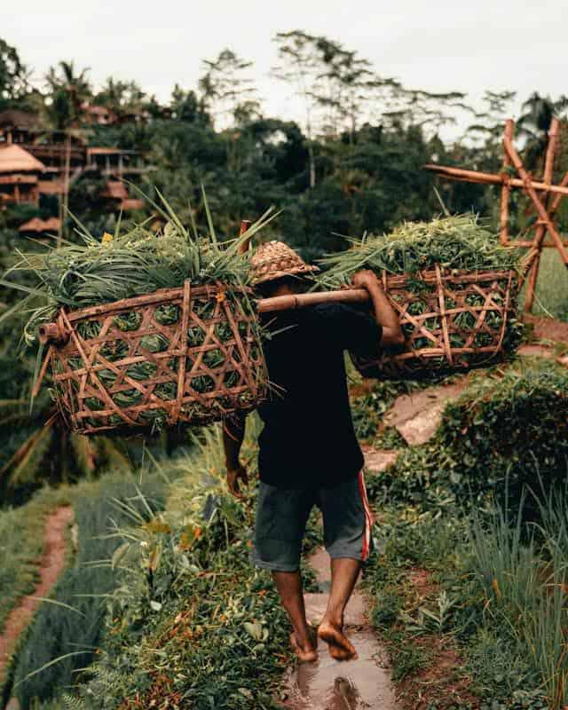 worker-rice-fields-bali
