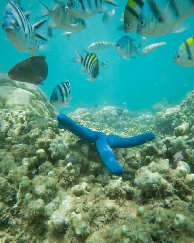seastar-fish-snorkeling-secret-gilis