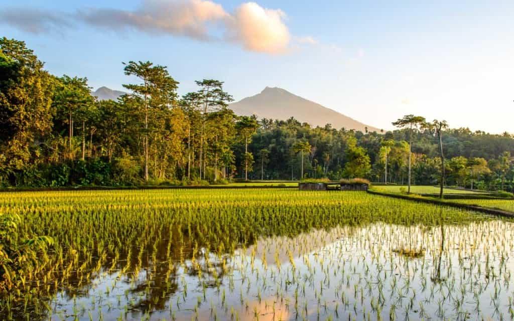 tetebatu-ricefields-sunrise
