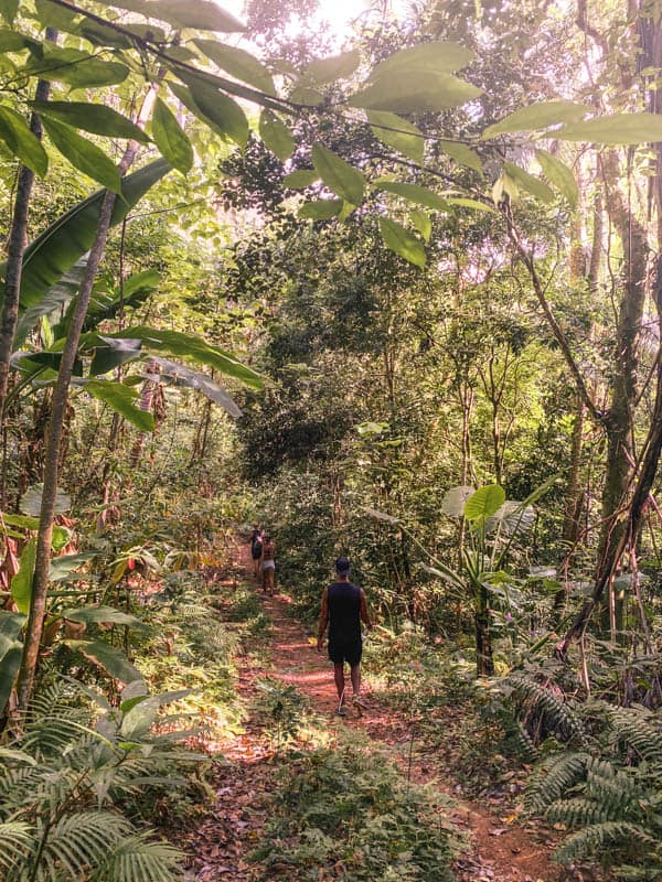haad-yuan-hike-jungle