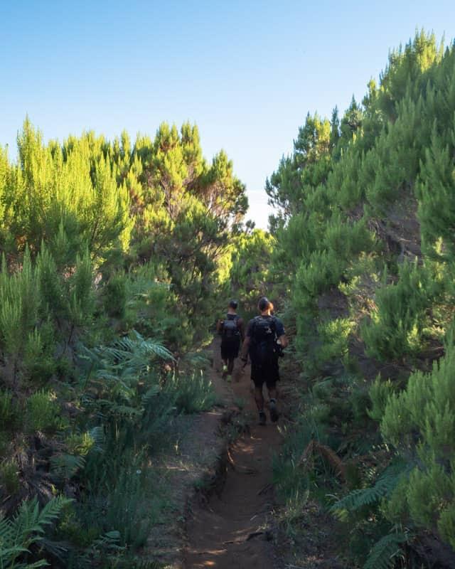 bushes-hiking