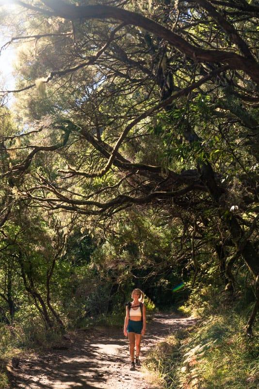 forest-levada-das-25fontes