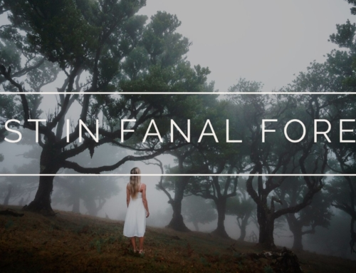 LOST IN FANAL FOREST