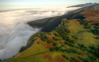 fanal-forest-vereda-drone