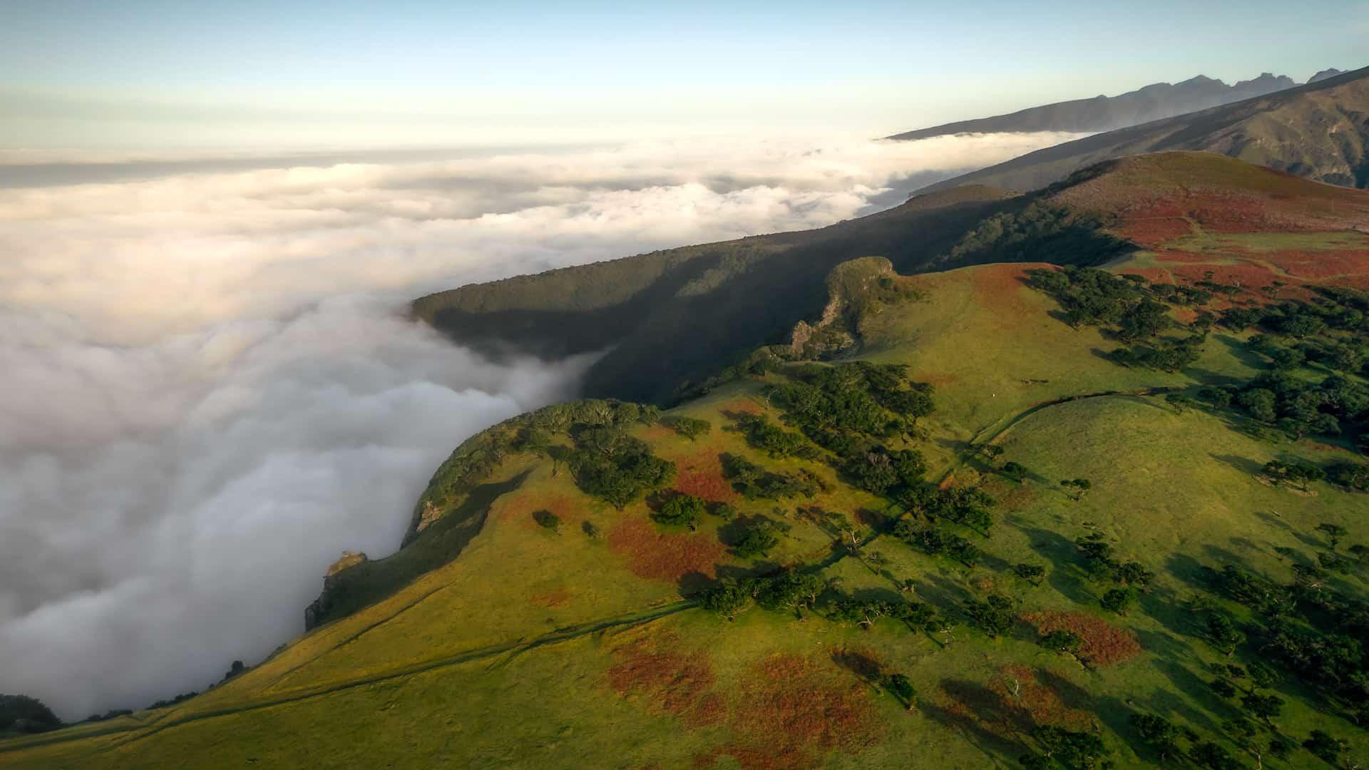 fanal-forest-vereda-drone-slider