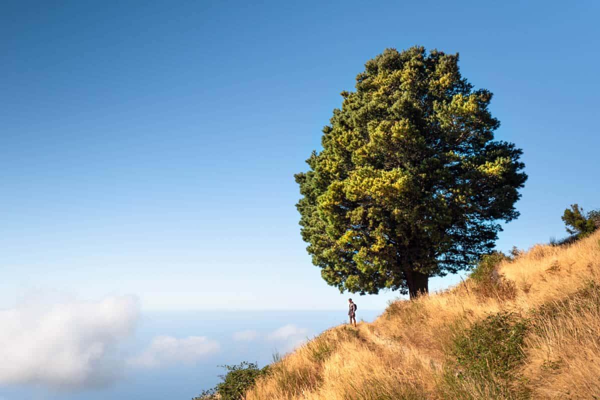 levada-do-paul-tree