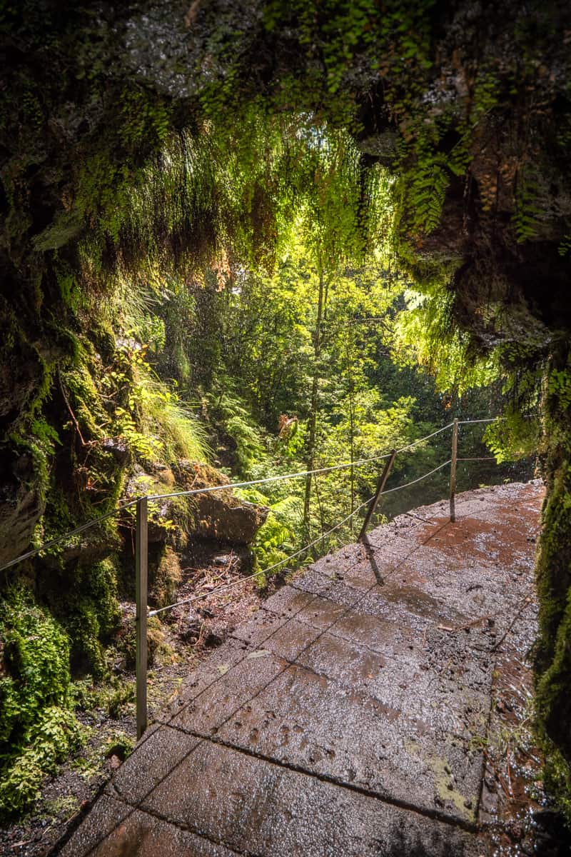 levada-faja-do-rodrigues-tunnel-moss
