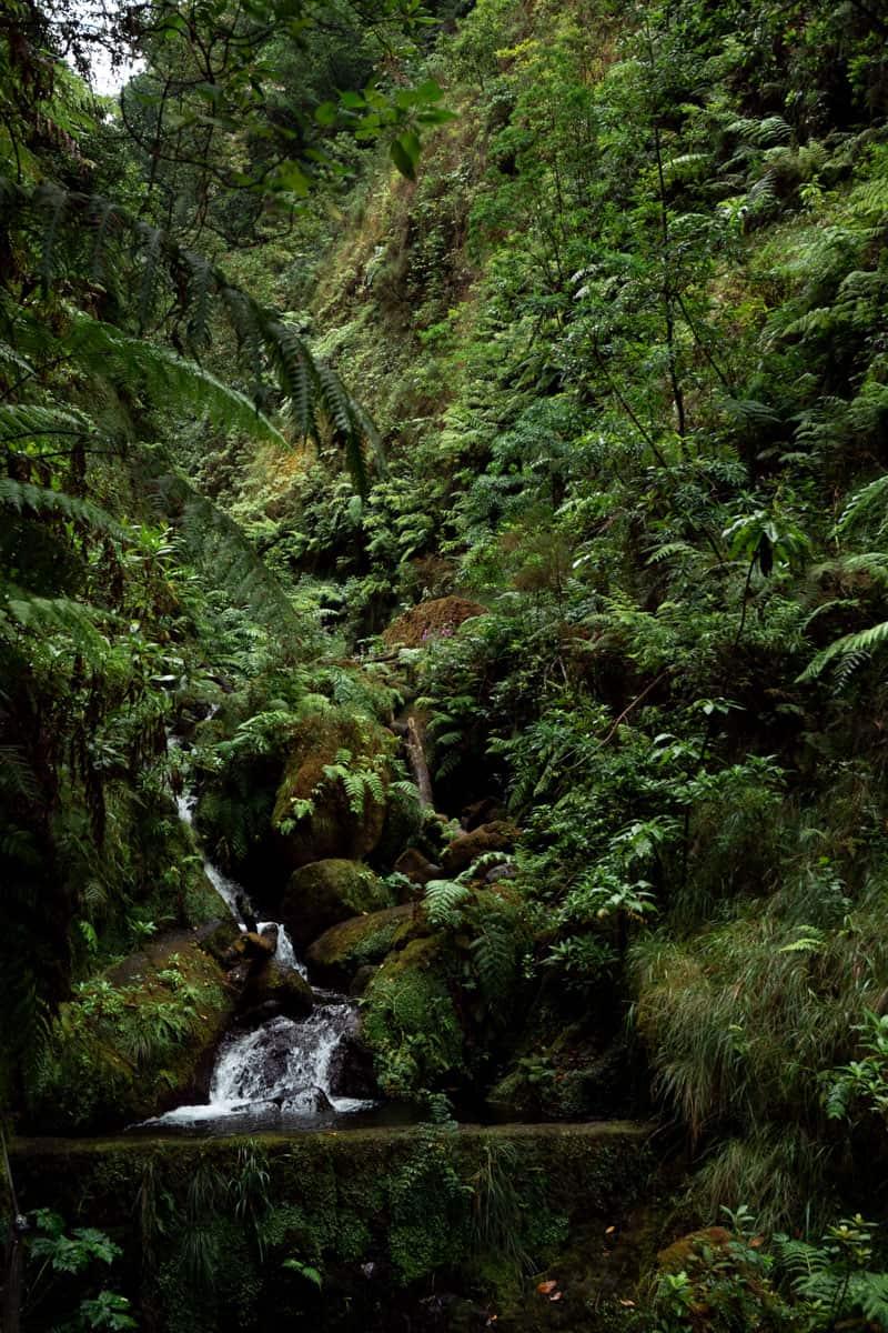 levada-faja-do-rodrigues-waterfall-stream