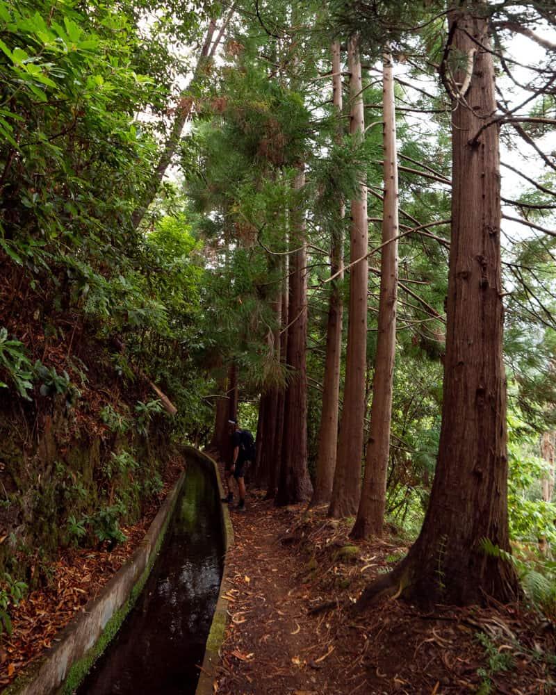 levada-walk-trees