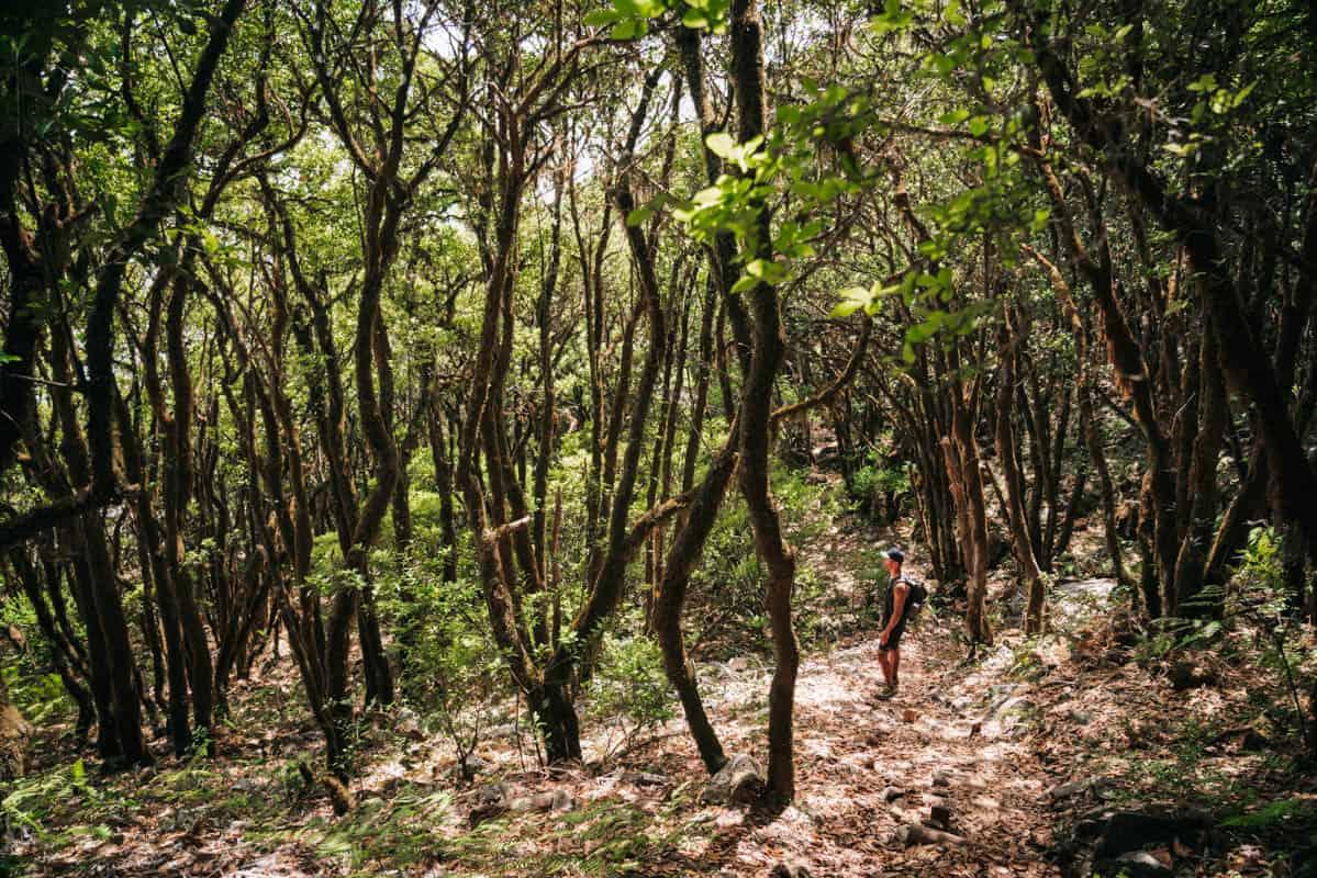 vereda-do-fanal-forest-trees