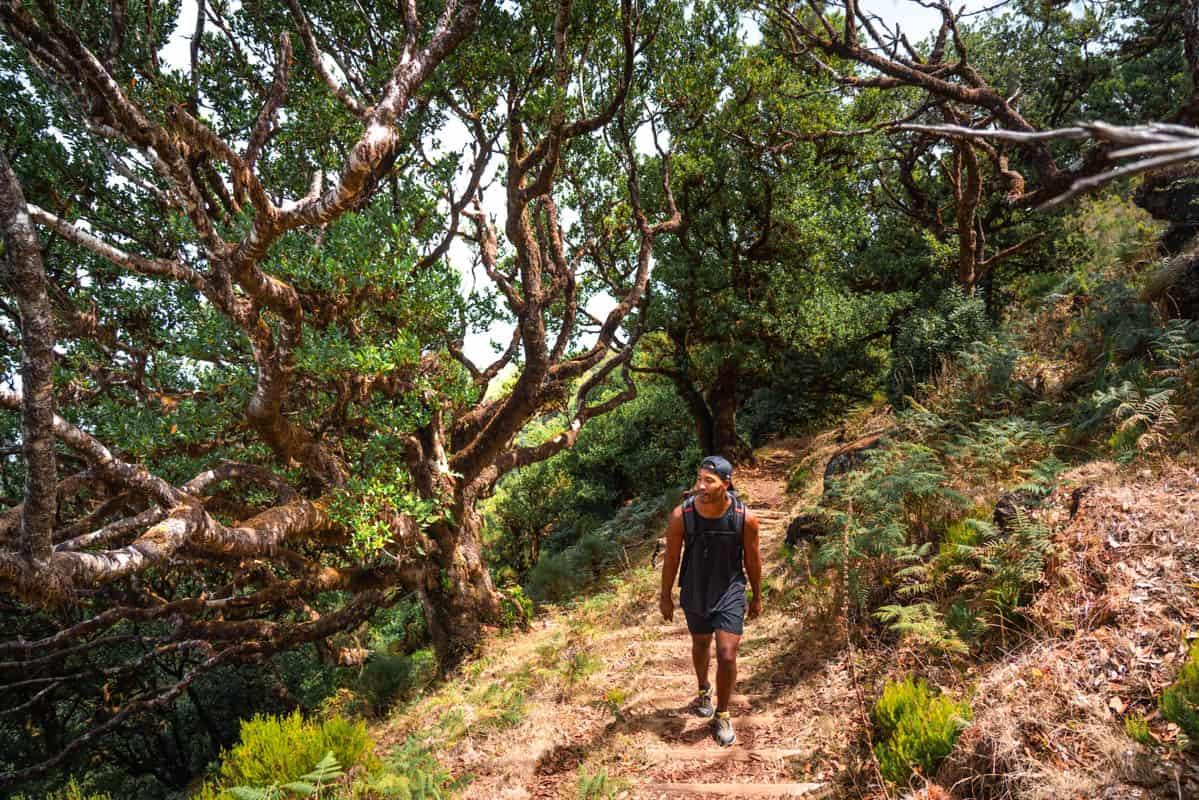 vereda-do-fanal-path-forest