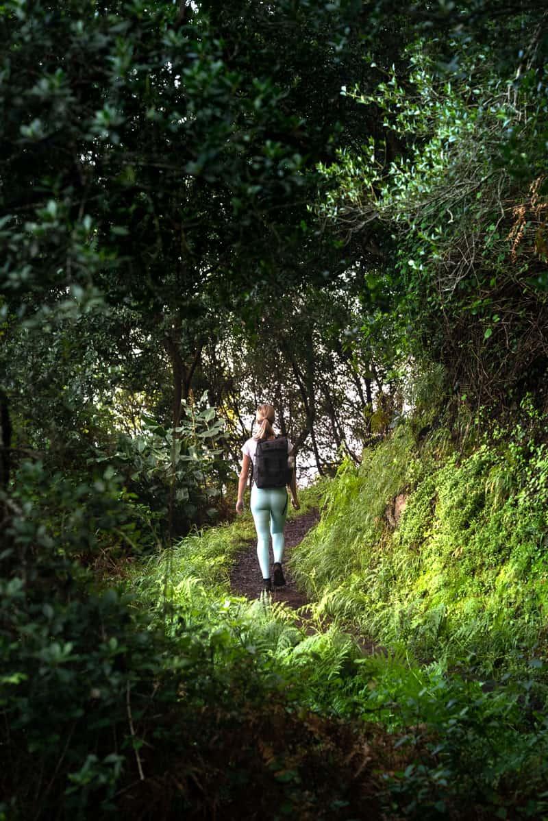 vereda-do-larana-forest-path