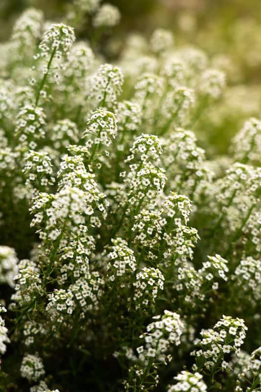 flowers-botanical-garden