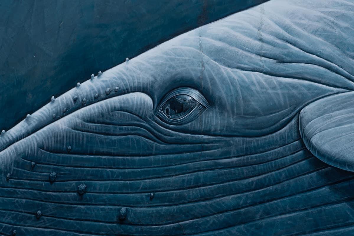 whale-closeup
