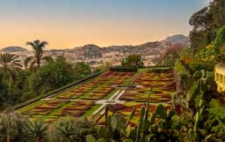 botanical-gardens-madeira-sunset