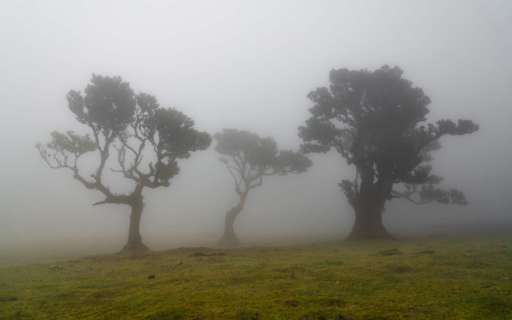fanal-forest-family-trees