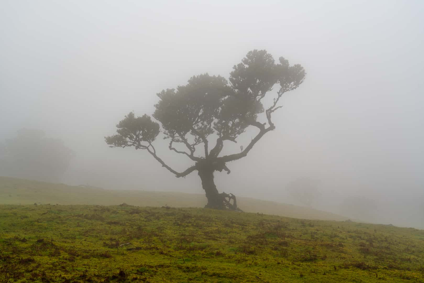 fanal-forest-lonely-tree