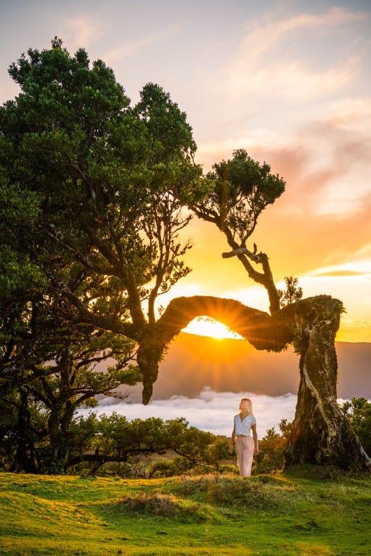 fanal-forest-sunset-madeira