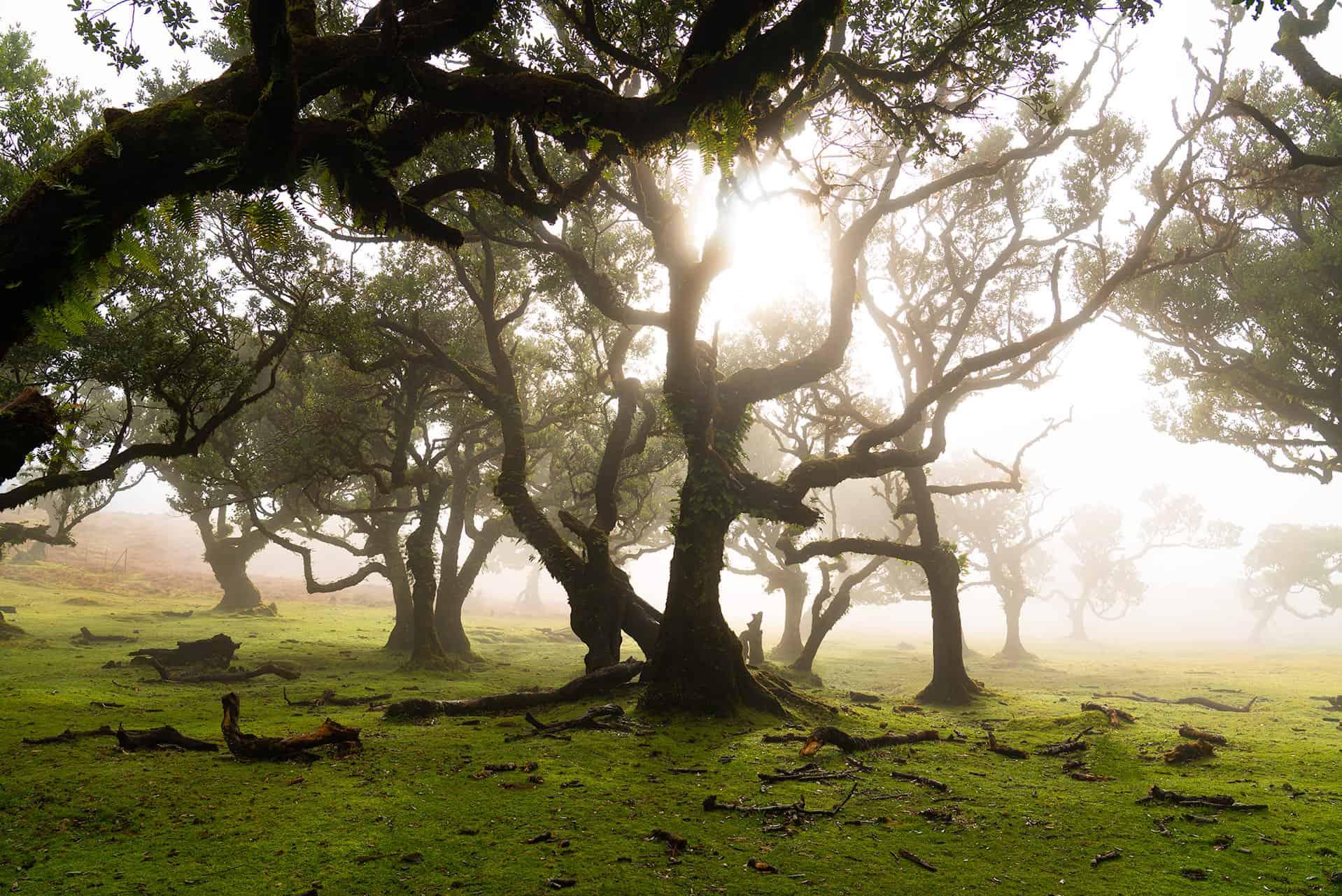 fanal-forest-tree