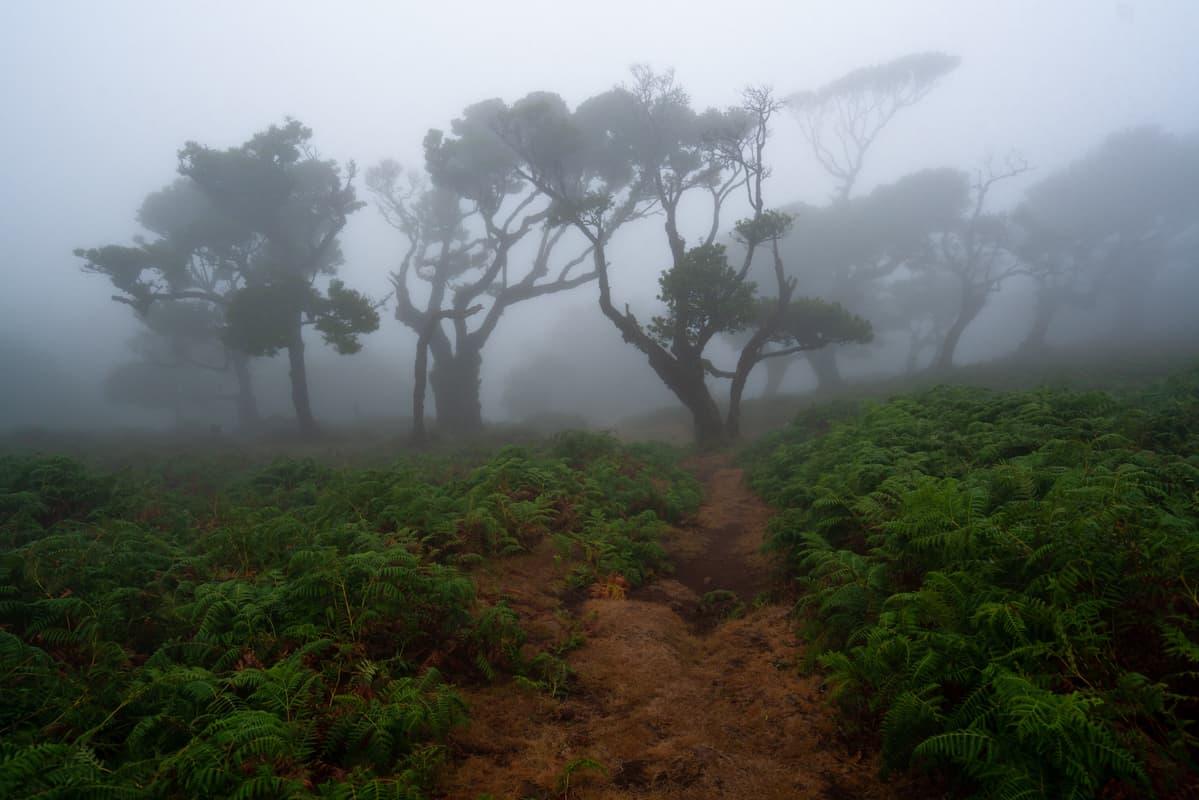 foggy-fanal-forest
