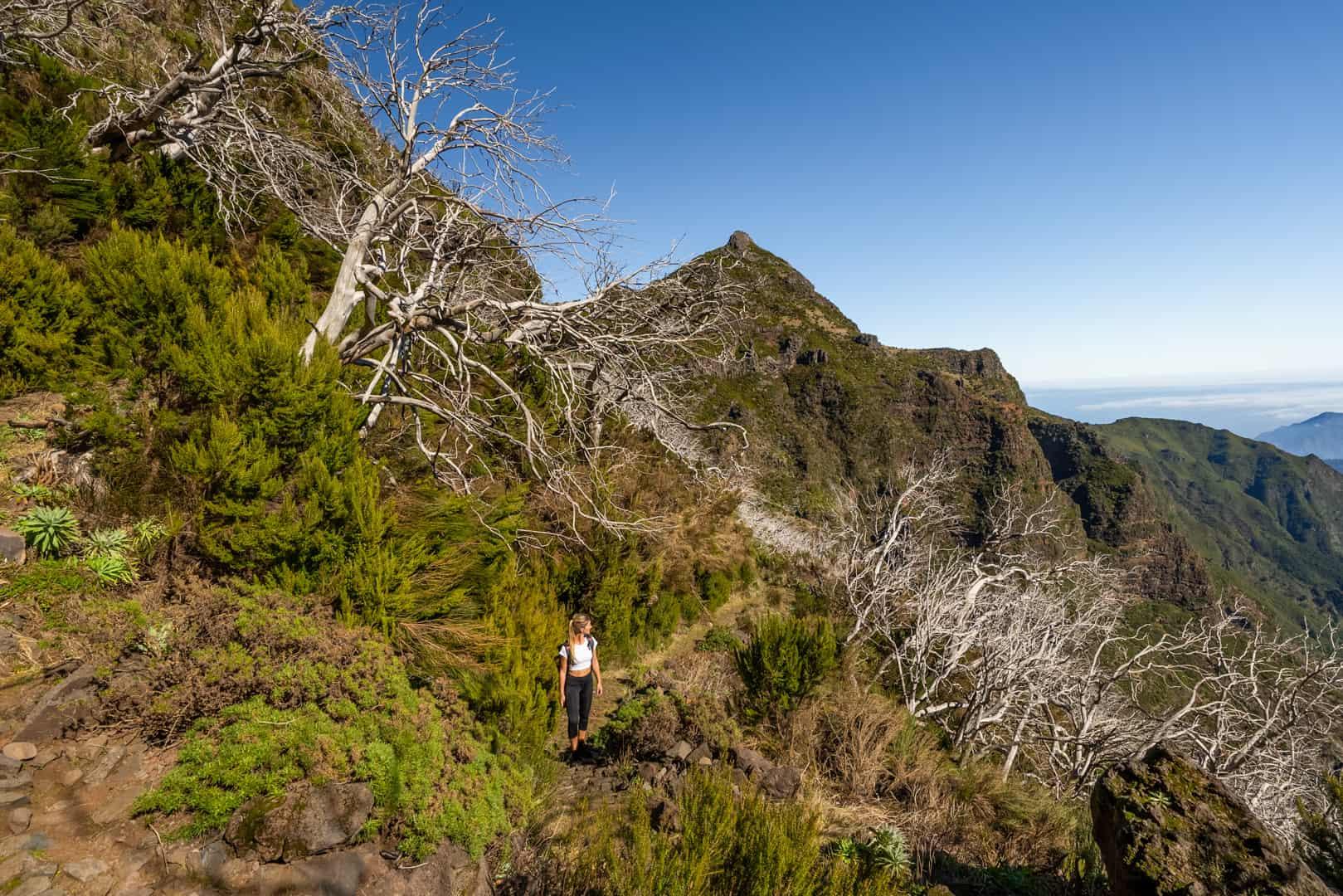 dead-tree-forest-pico-do-arieiro-path