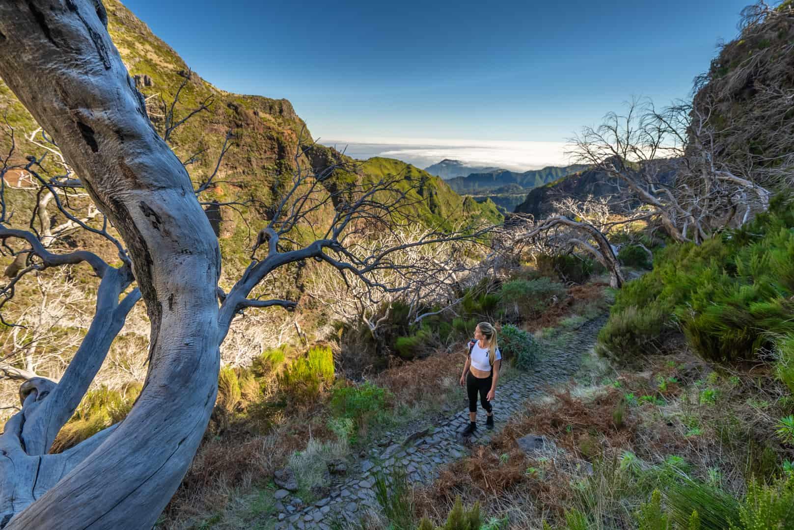 dead-trees-pico-do-arieiro-hike-path