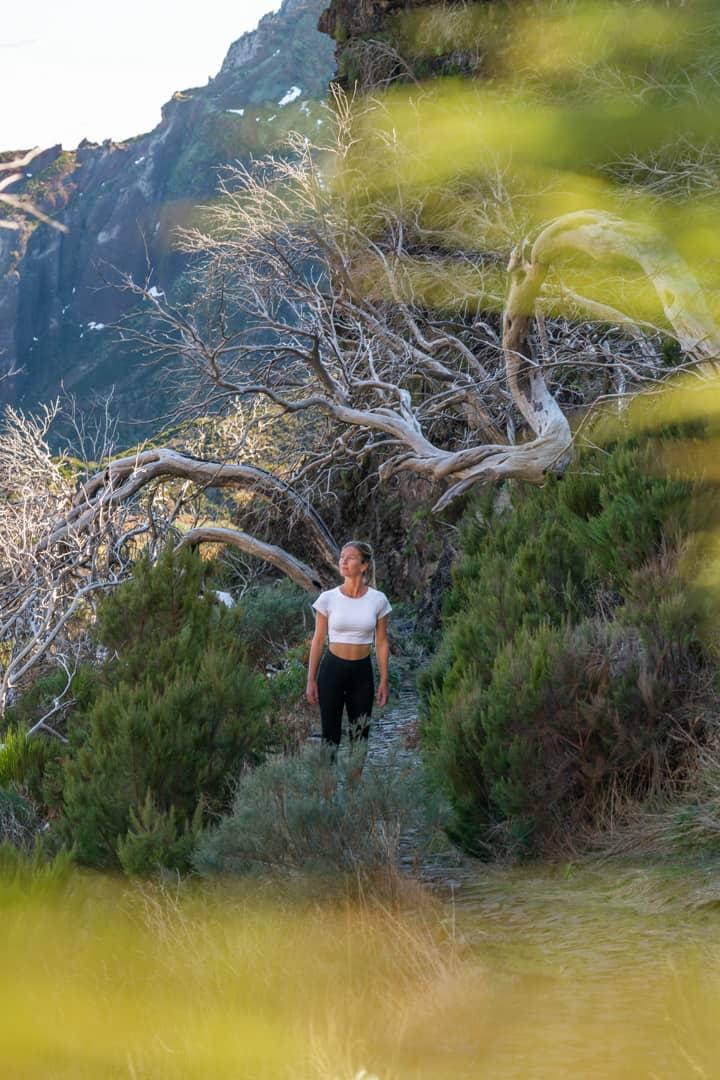 dead-trees-pico-do-arieiro-path-bokeh
