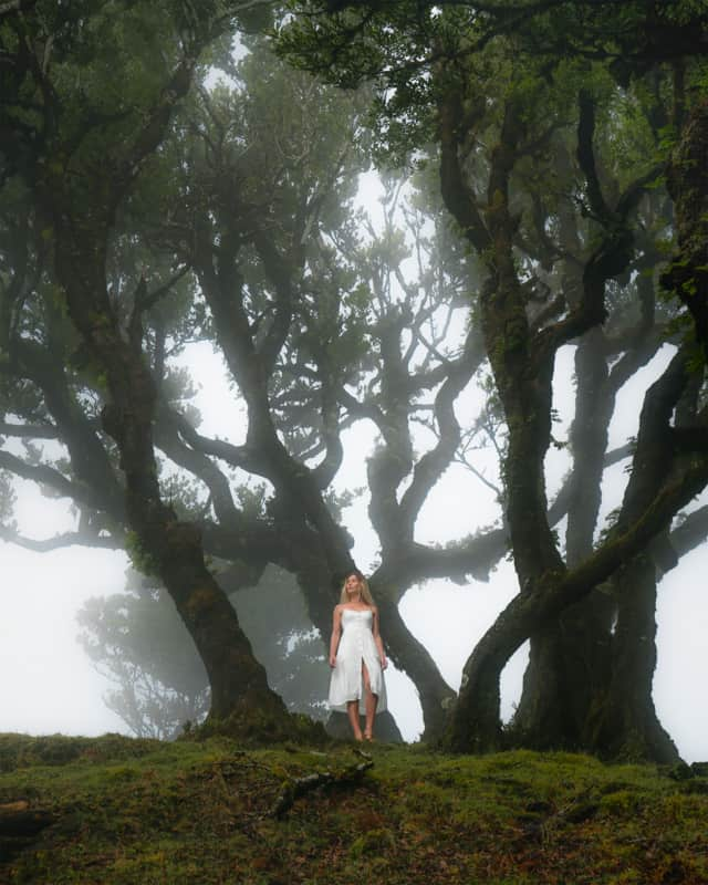 moody-forest-madeira